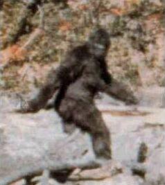Sursă Patterson-Gimlin film, Wikipedia.