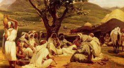 Proverb arab despre copac şi odihnă