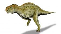 """Dinozauri cu """"sânge cald"""" în Cretacic?"""