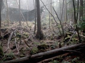 Pădurea Bialowieza din Polonia a fost invadată de OZN-uri în mai 2016